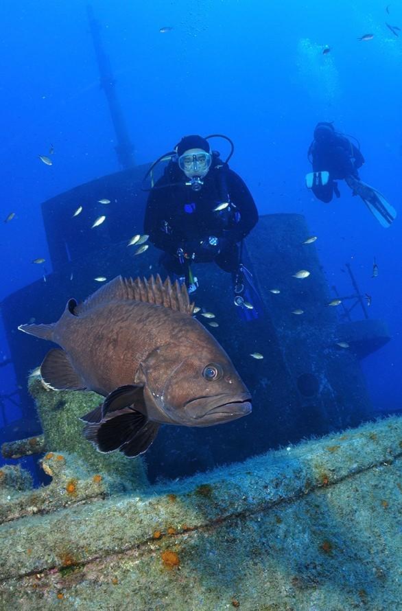 Travels by Travelers Μάλτα, το νησί των Ιπποτών και των καταδύσεων. Ευρώπη City & Weekend Breaks By The Sea Φύση και Περιπέτεια HOME SLIDER Sponsored  Ρηγούτσος καταδύσεις Μάλτα
