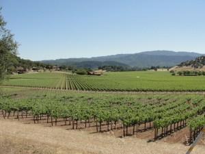 USA - California - Napa Valley 02