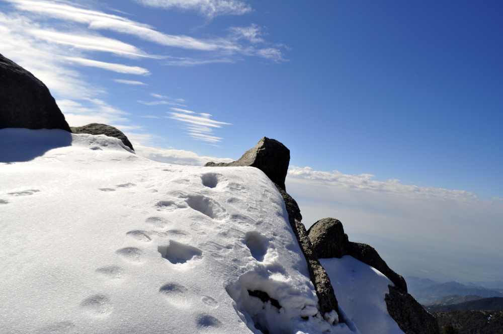 Triund in January