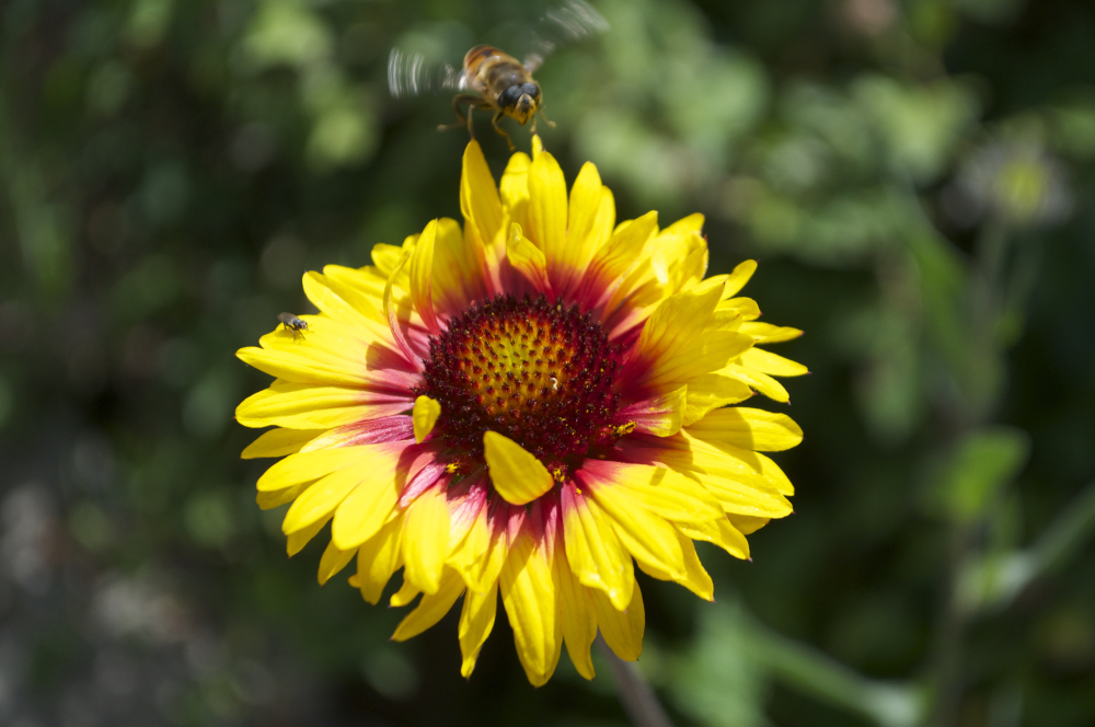 Flower and bee.