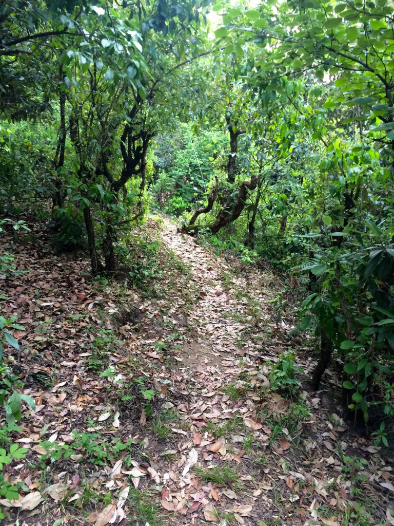 Forest walk Jhaltola