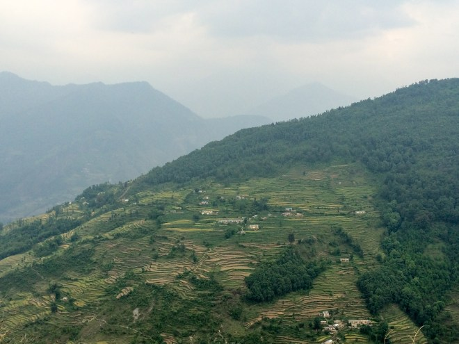 Terraced wheat and rice fields visible from the road