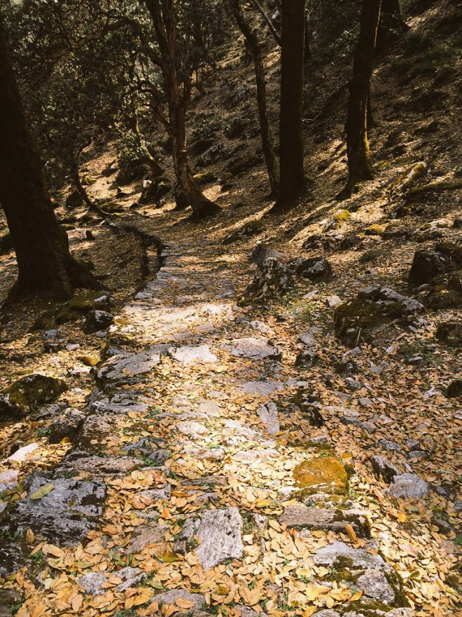 Walking in dense cedar and oak forests