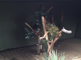 Kangaroos and Koalas at Bonorong Wildlife Sanctuary