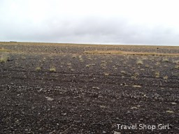 Vegetation diminishes and begins to look more like black sand.