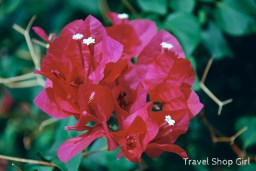 Flowers outside of Asolare