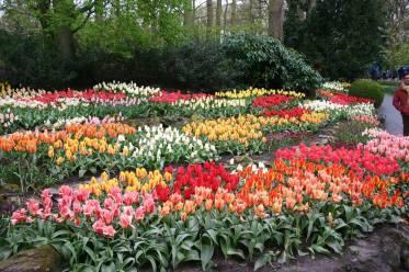 Tulip-Time-Rhine-10