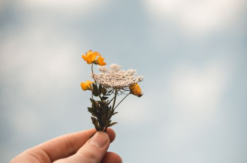 A picture of a hand holding a small flower