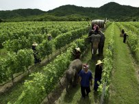 Hua Hin Winery with Elephants