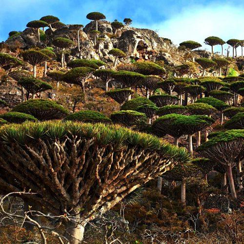 Socotra Island | Yemen | Middle East