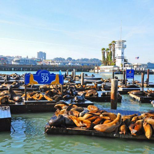 Pier 39 - Ficherman's Wharf - San Francisco - California - Sea Lions