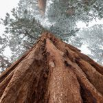 united states_california_redwood national park_forest