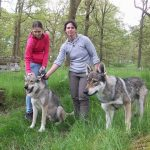 things to do lake district_ walking with wolves