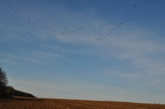 As far as the eye can see, there were cranes!