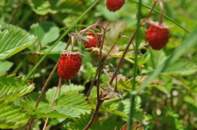 More strawberries.