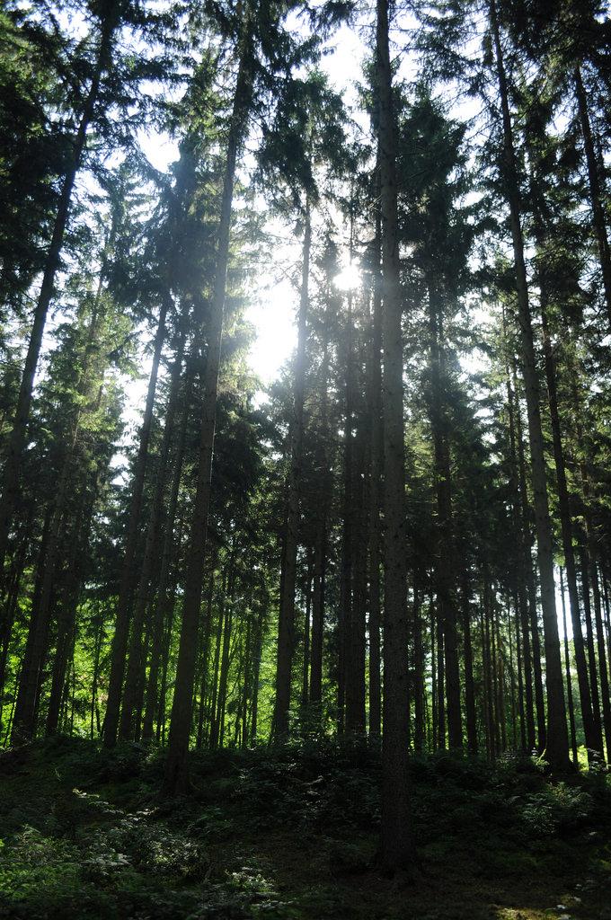 Morning light through the trees.