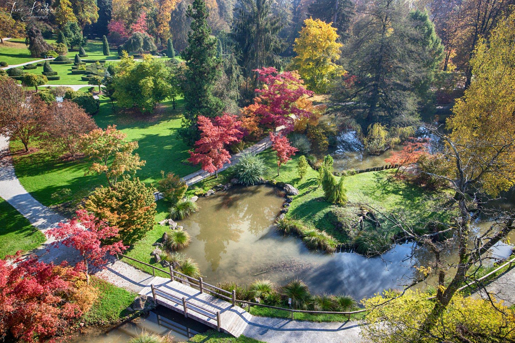 Aerial View Flower Garden
