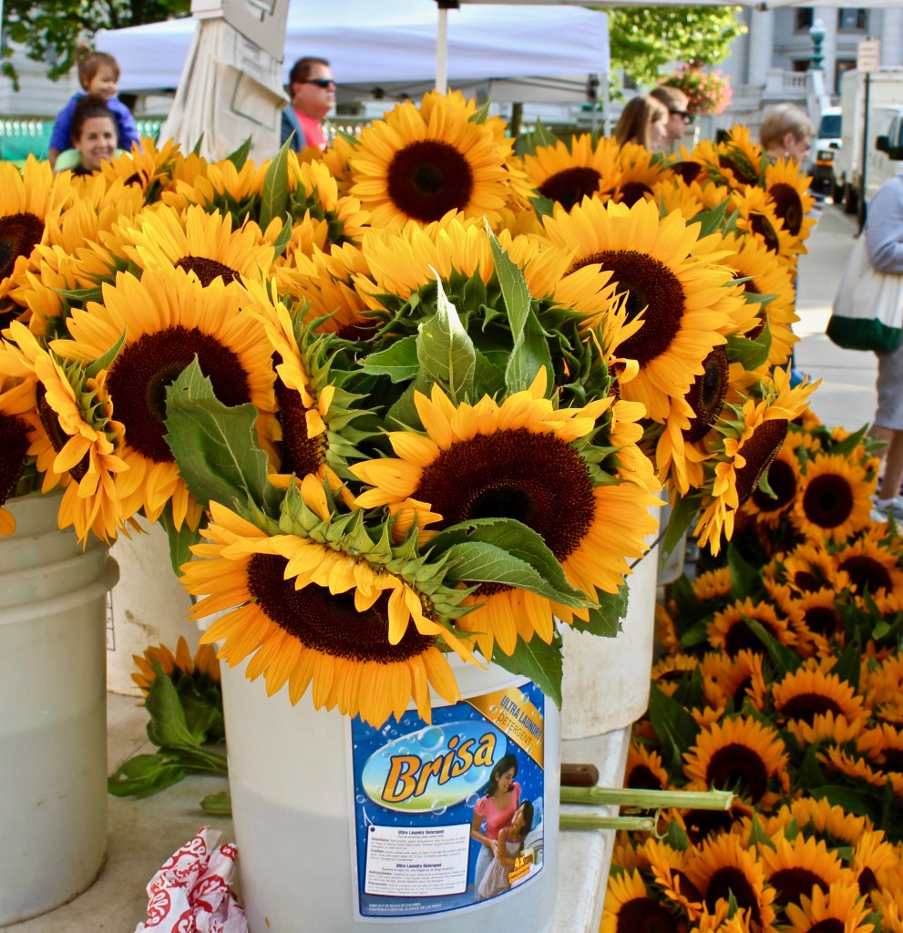 Madison Farmers Market: Where else will you find buckets and buckets of just-picked sunflowers? (Photo by Suzanne Ball. All rights reserved.)
