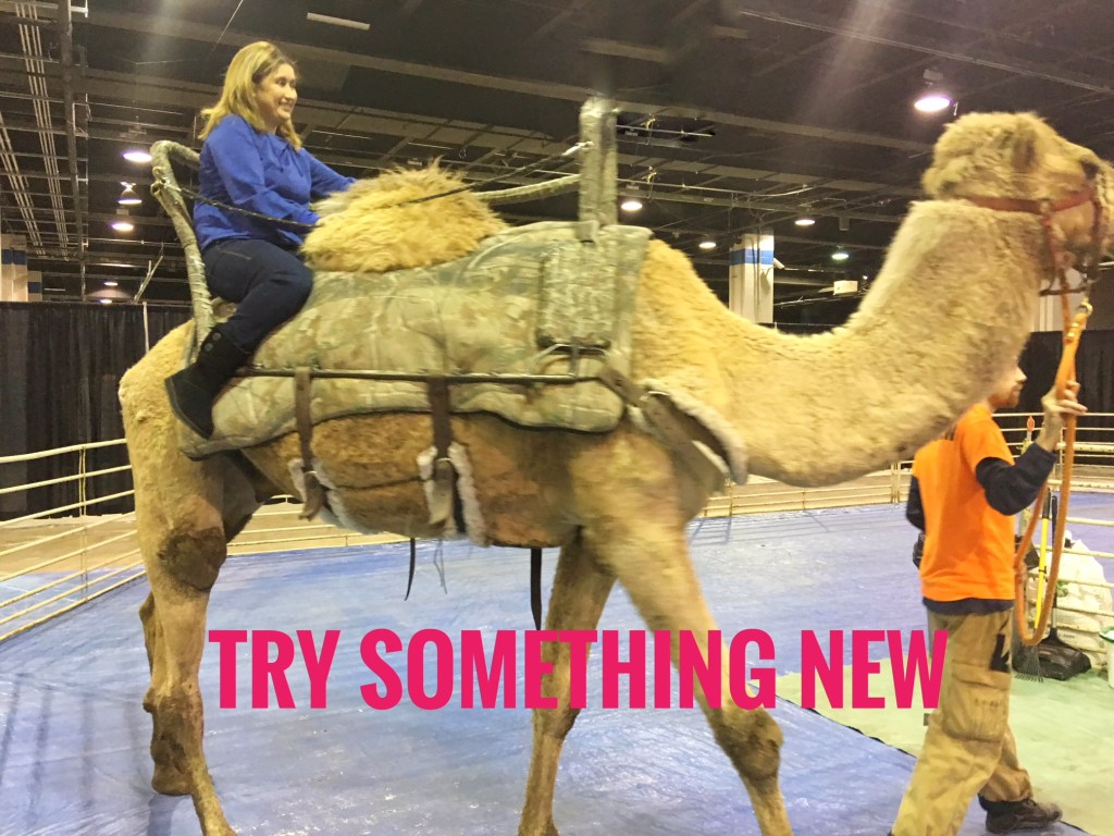 Travel show tips: How often do you get the chance to hop on a camel, without going to the Sahara Desert? Hop on!