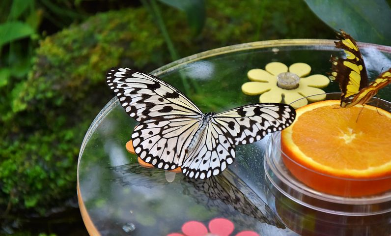 Staycations give you the chance to stroll through botanical and butterfly gardens, without the crowds. Take your time and enjoy!