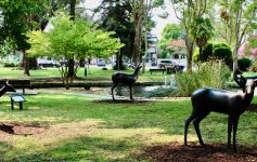 Sonoma Plaza: Where California Began