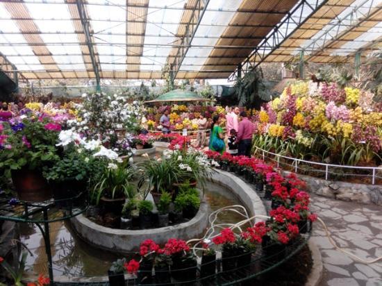 Image result for flower show gangtok tripadvisor images