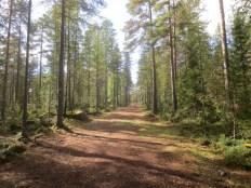 Path in Vimpeli (Hill in Kajaani)