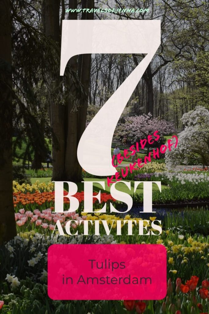 Heading to Amsterdam in the Spring? Here are 7 of the best ways to see the tulips in Amsterdam! #amsterdamtulips #amsterdamguide #thingstodoinamsterdam