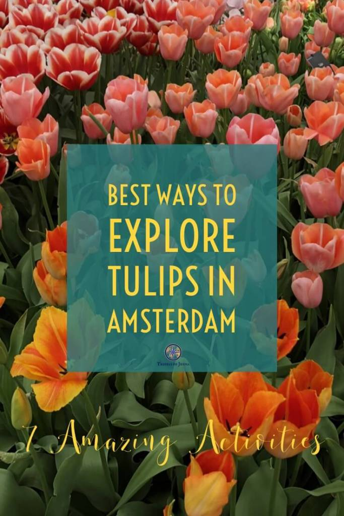 Dreaming of tulips in Amsterdam? Here are 7 of the best ways to see and explore these beautiful flowers while you're in Holland. #tulipsinamsterdam #thingstodoinamsterdam #amsterdamtulips #tulipsinholland