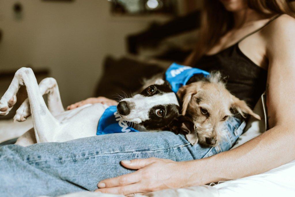 House-sitting e pet-sitting: per viaggiatori amanti degli animali
