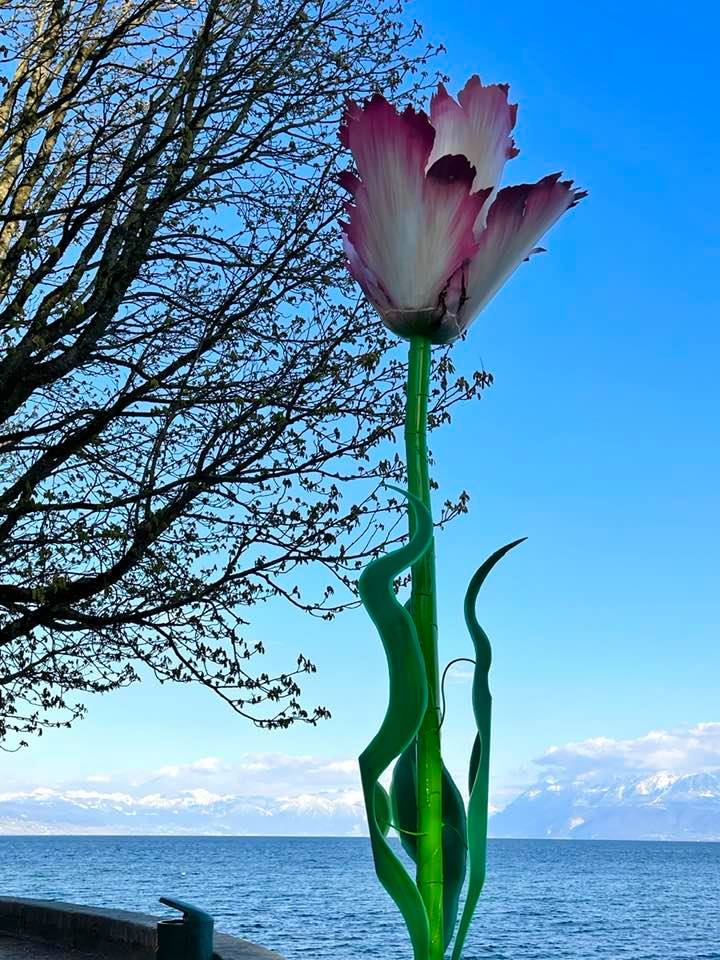 The Stunning & Colourful Annual Tulip Festival in Morges Switzerland