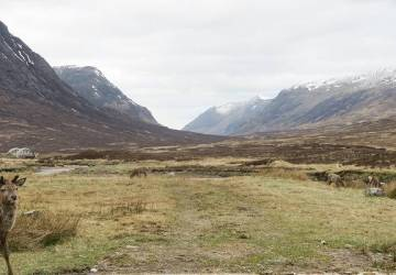walking glen coe deer