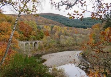 killiecrankie autumn big tree country