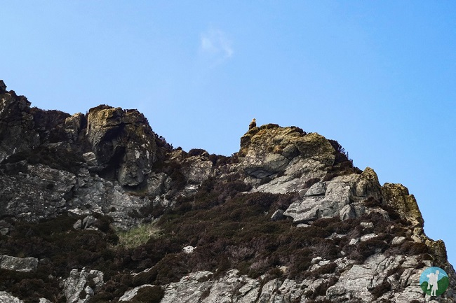 sea eagle isle of lewis wildife hebrides