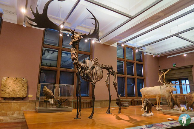 kelvingrove creatures of the past museums