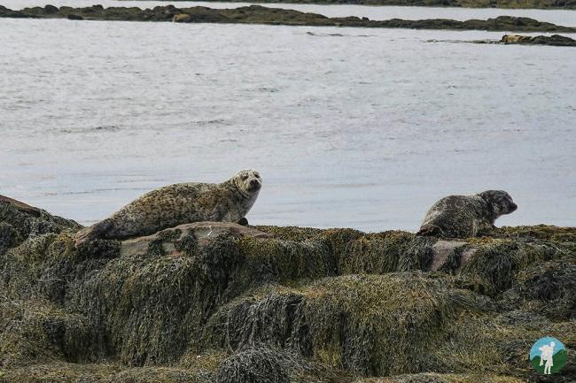 berneray seals