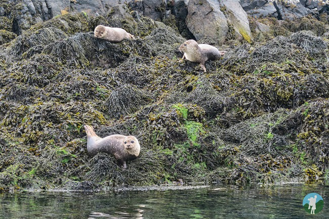 outer hebrides holidays seals
