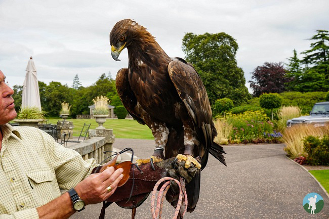 golf european championships golden eagle