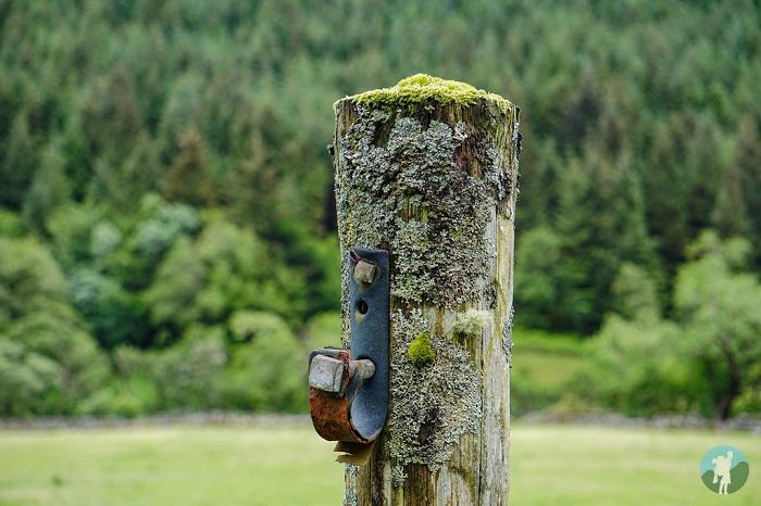 moss scottish highlands