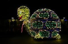 1.1434786525.electric-tortoise