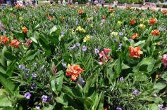 1.1436400629.flower-border