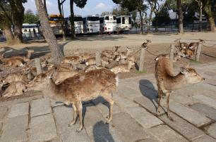 3.1459193119.deer-in-nara