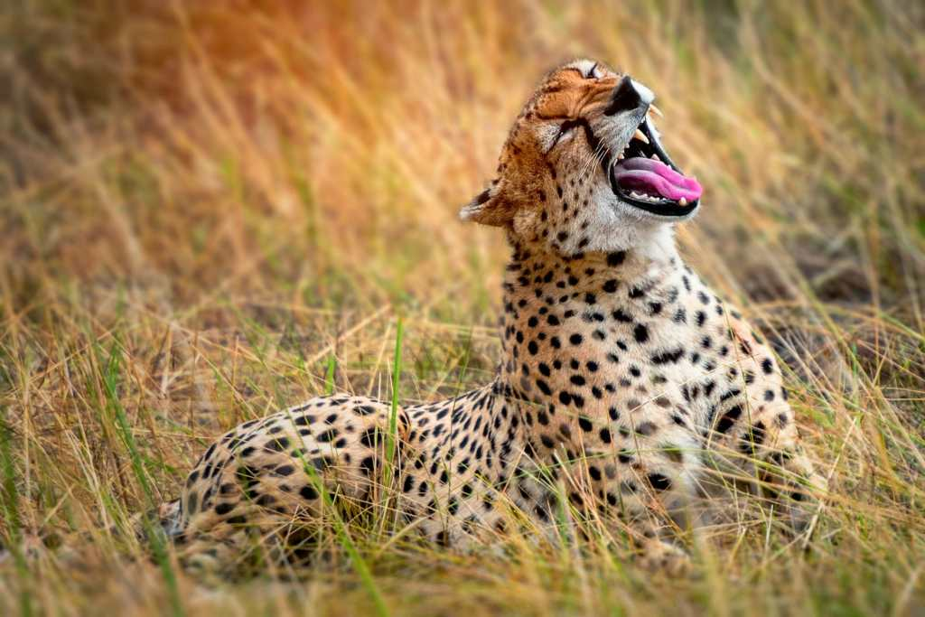 Perfect Bucket List Travel: Try An African Safari! Travels With Bibi