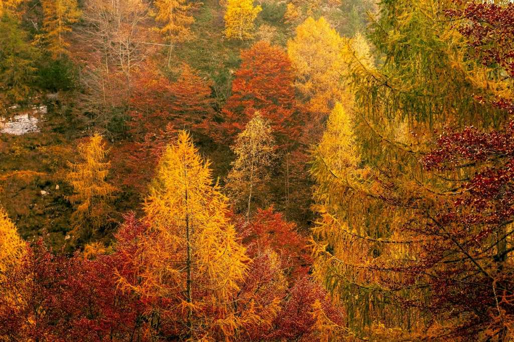 The Best Fall Color Guide: Maggie Valley, North Carolina Travels with Bibi