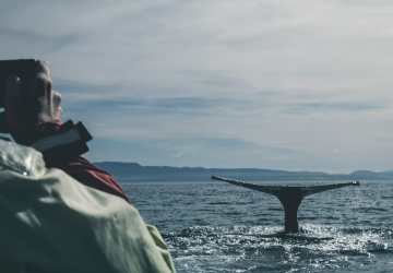 5 Perfect Places to Whale Watch in California Travels with Bibi