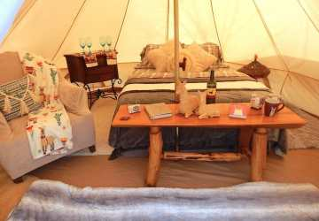 Tennessee's Best Place For Glamping: The LlamaLodge! Travels with Bibi