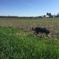 Dog Walk Challenge: Live Walk