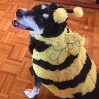 Howlidays: Pollinator Week