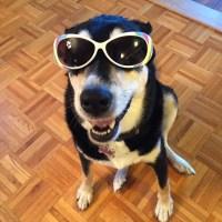 Howlidays: Sunglasses Day
