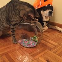 Howlidays: Aquarium Month